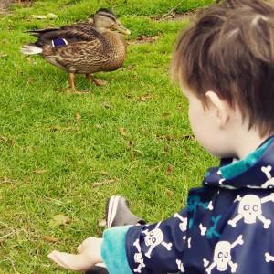 Here ducky ducky ducky